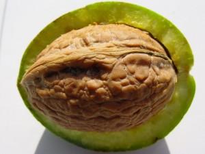 Aminosäuren in Lebensmitteln