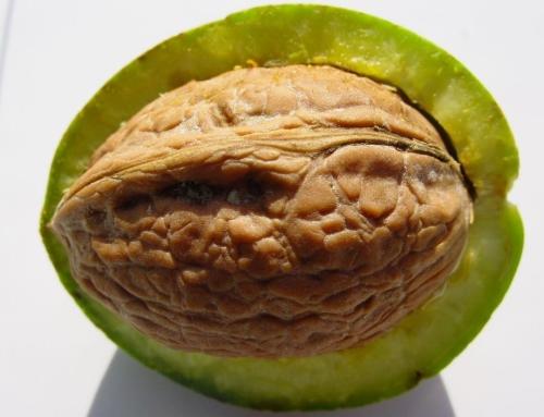 Nahrungsmittel mit hohem Aminosäurengehalt