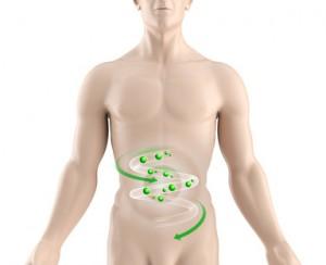 Aminosäuren Stoffwechsel Arginin