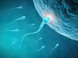 Fruchtbarkeit Mann