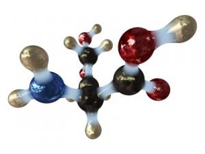 Glutaminsäure Glutamin Aminosäuren