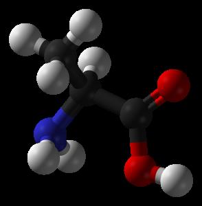 l-alanin Aminosäuren